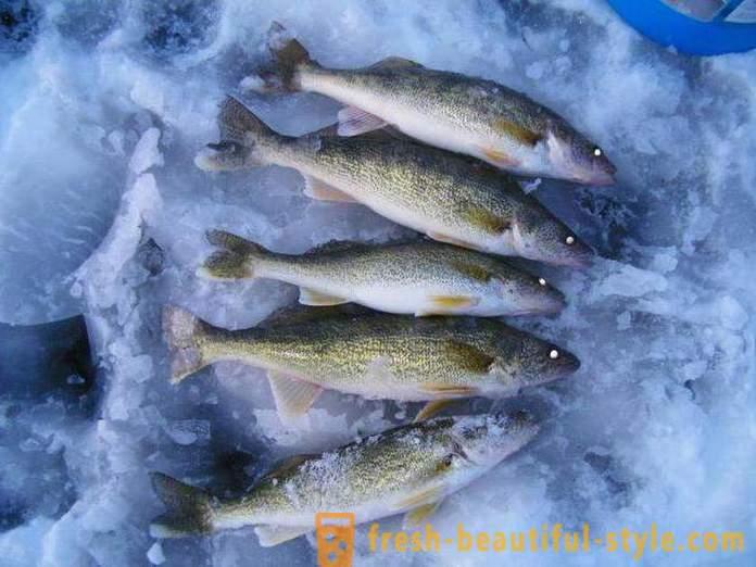 mjesto pretraživanja ribe Dating za ljeto girlsgogames