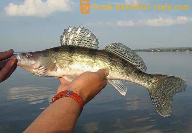 puno više spotova s ribama trošak za upoznavanje 210 olova