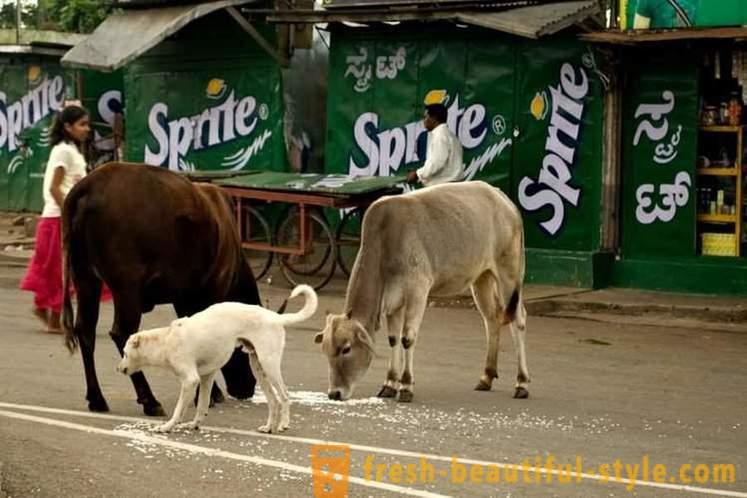 Mjesto za druženje u gradu Batangas